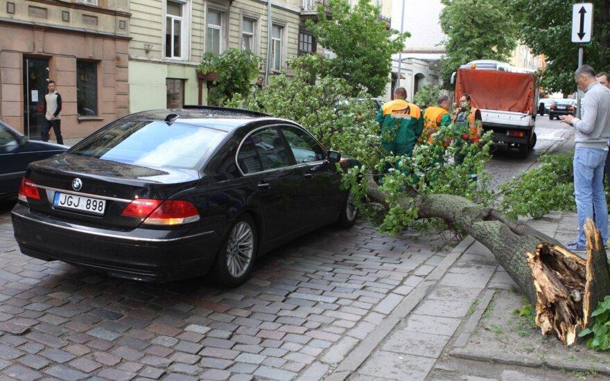Vilniuje ant gatvės nuvirtęs medis apgadino BMW ir sukėlė didžiulę spūstį