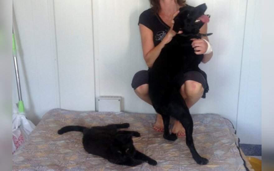 Galimybės tapti gyvūnų globos savanoriu: praktiniai patarimai