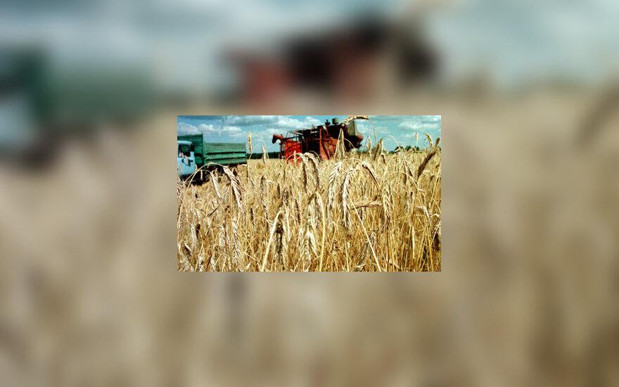Javai, kombainas, žemės ūkis
