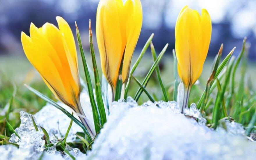Orai: po sniego ir šalčio atplūs šiluma