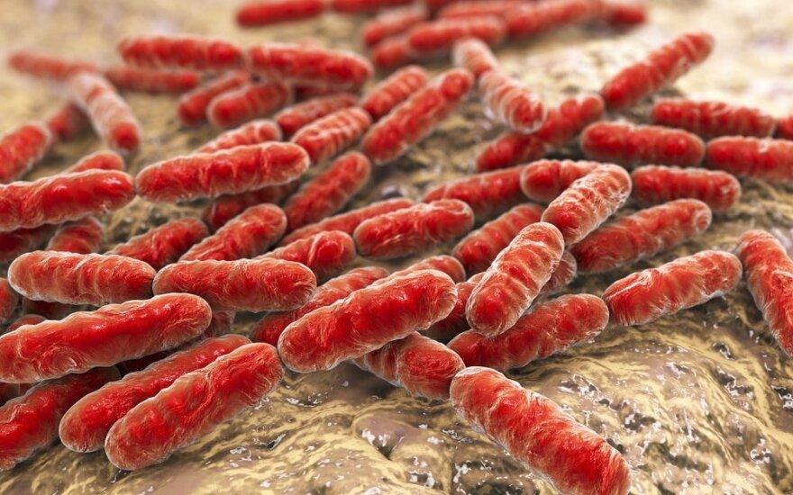 Bakterijos, kurių kūnas nori daugiau