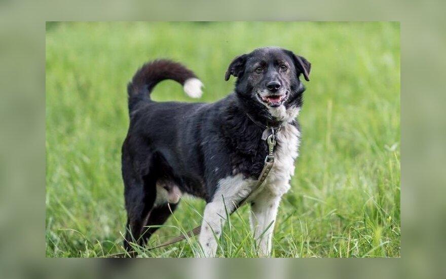 Išduotam šuniukui Laikiui ieškomi nauji šeimininkui