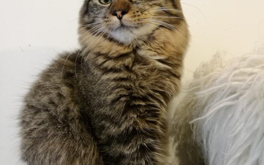 Darsis – truputėlį kitoks katinėlis, bet laukiantis meilės