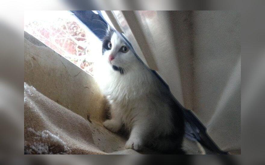 Akcija: išgelbėkime kačiuką Pūkį!