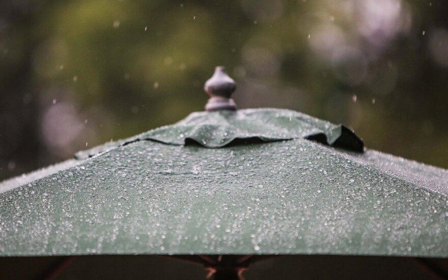 Šilti ir drėgni orai mėgins pažadinti grybus