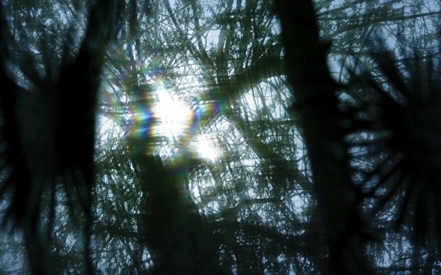 Sutemus miške ima daugėti keistų šešėlių