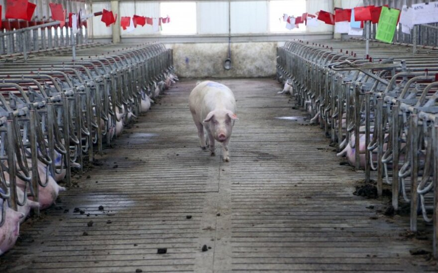 """120s"": African swine fever outbreak in Lithuania and secrets of the MH17 flight"