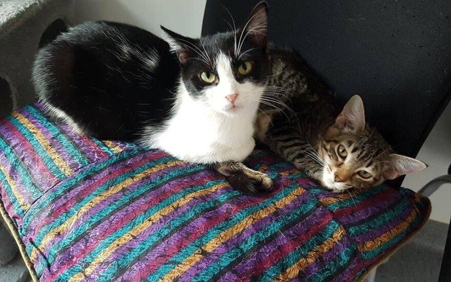 Dvi katytės laukia stebuklo – dovanojamos kartu