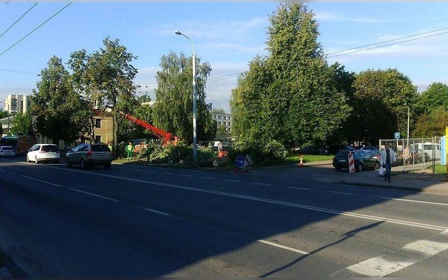 Vilnietė stebisi: sostinėje leista iškirsti 37 medžius