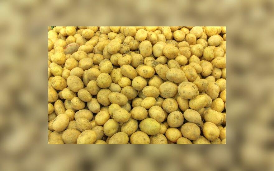 Kas paneigs, kad nevalgysime genetiškai modifikuotų bulvių?