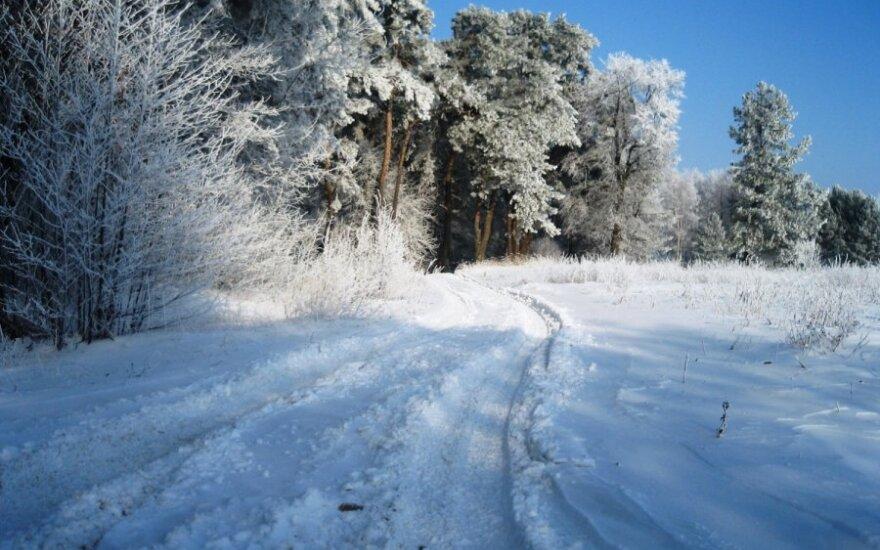 Stirniškių miškas , Vilkaviškio rajonas, DELFI skaitytojo Valentino Kurtinaičio nuotr.