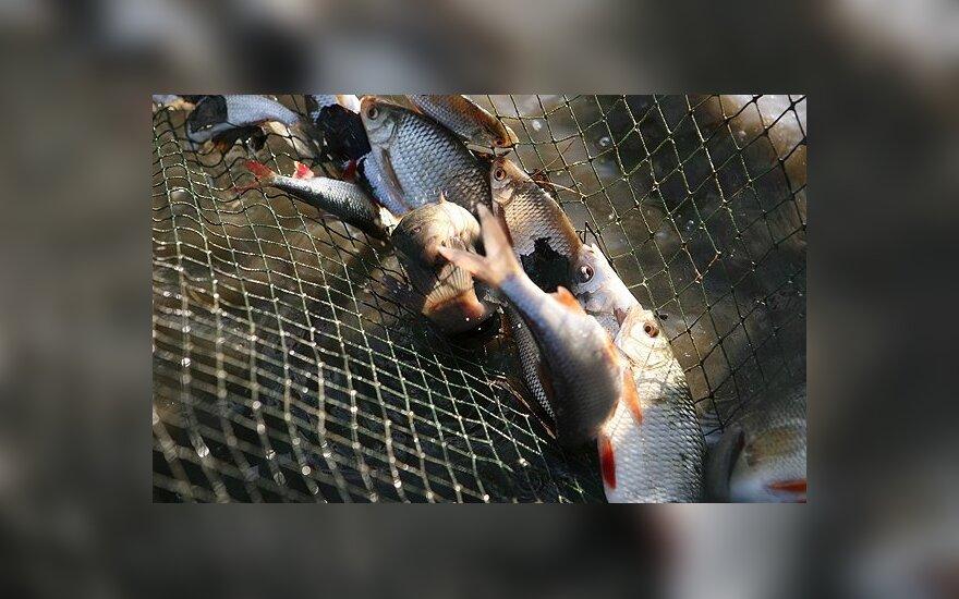 Šviežios žuvys Neringos žvejams neapsimoka