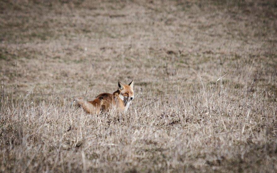 Lietuvoje siūloma leisti medžioklę su lankais