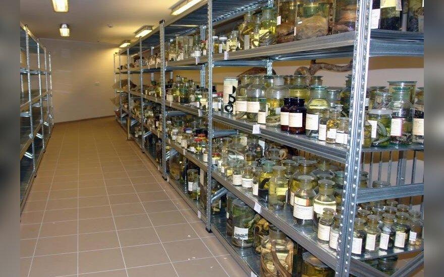 T. Ivanausko muziejuje įsikurs gyvūnų audinių bankas