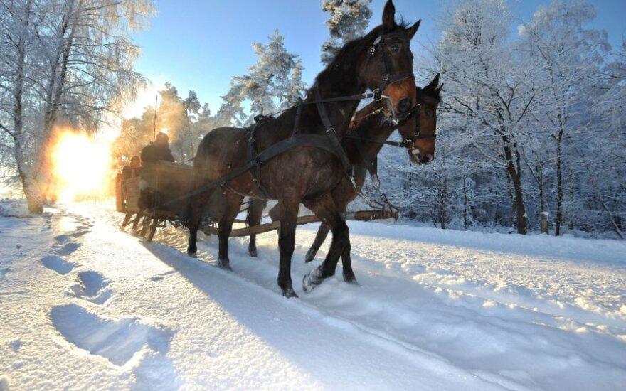 Žirgai žiemą