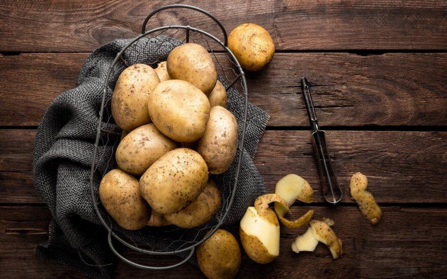 Lietuviška bulvė bulvei nelygu – yra saugančių sveikatą, ir figūrą