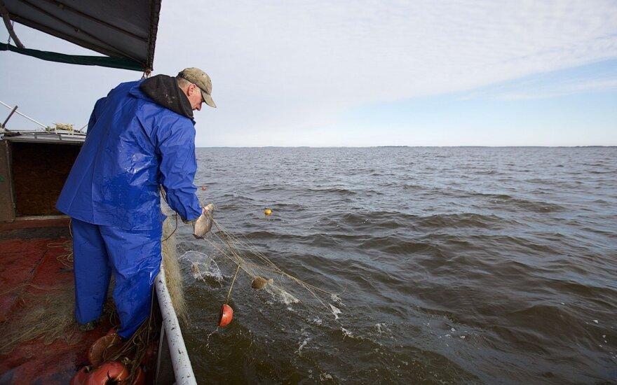 Dėl galimos taršos specialistai tirs sužvejotą žuvį Kuršių mariose
