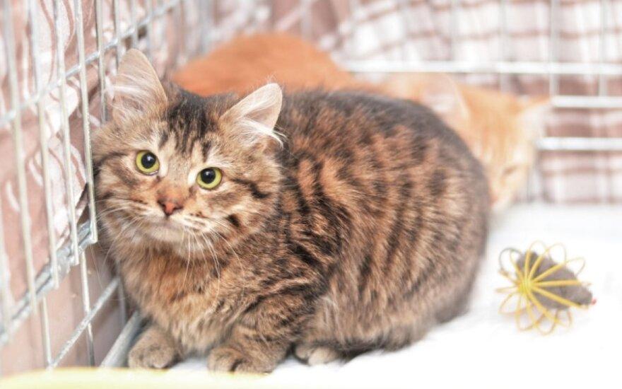 Katinėlio Singlo svajonė, kad jį kas pamiltų...