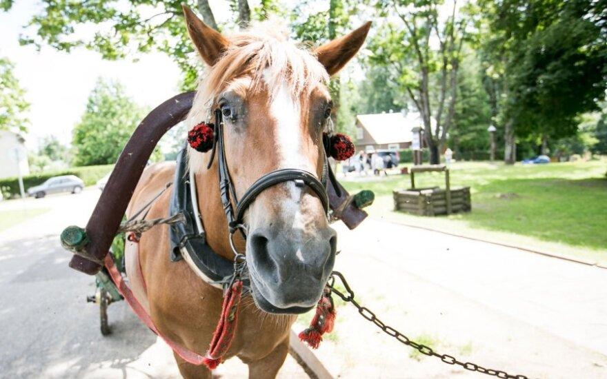 Mokytoja: ir arkliui buvo aišku, kad sąlygos nelygios, tačiau tokia valstybė