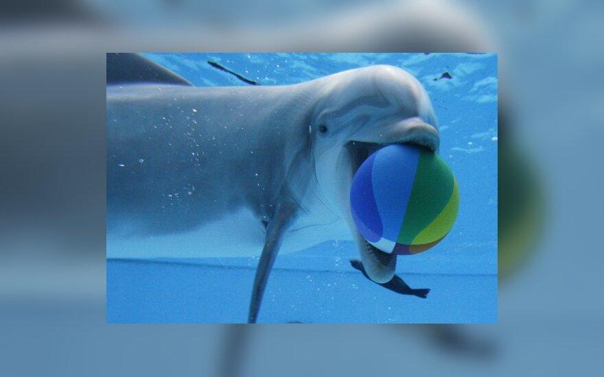 Už LNK žiūrovų paaukotus pinigus – geresnės delfinų gyvenimo sąlygos