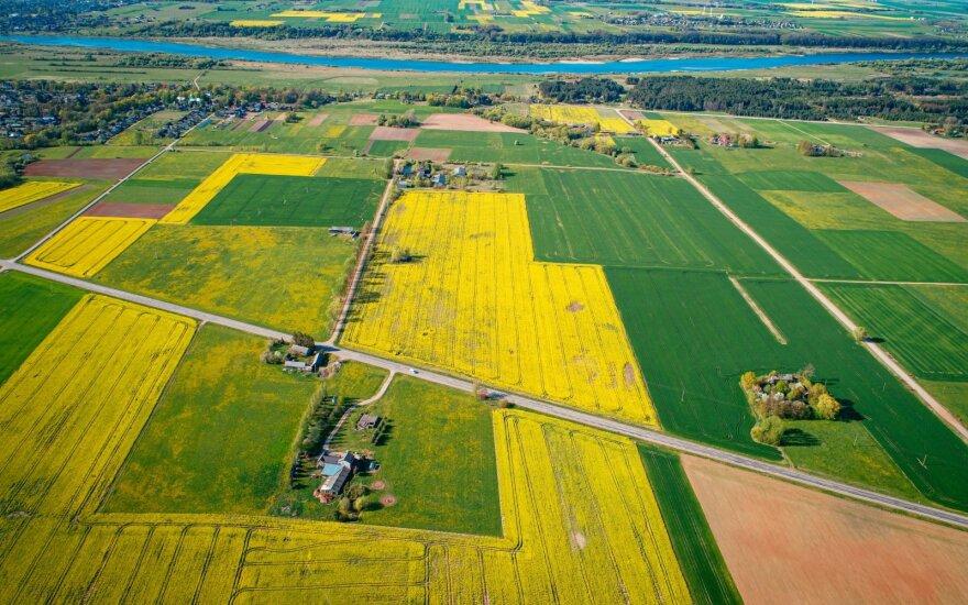 Stambieji ūkiai – apie naują išmokų planą: mums siekiama stipriai pabloginti ūkininkavimo sąlygas