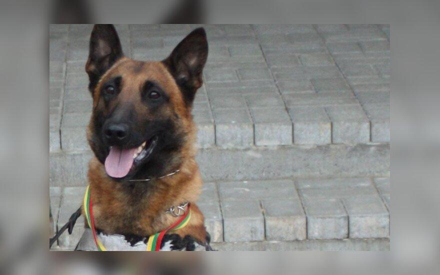 Lietuvoje nušautas pasieniečių šuo Ramzis