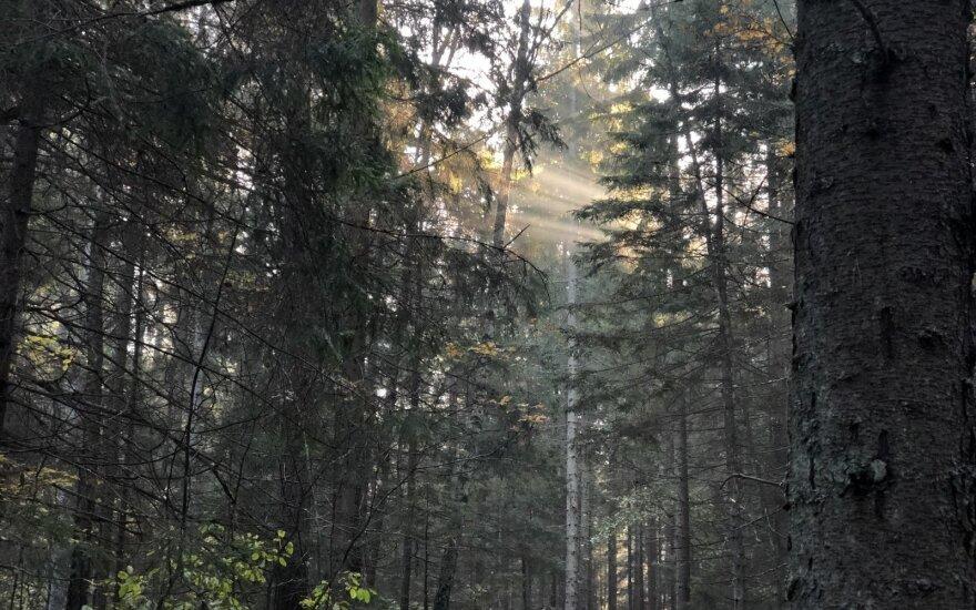 miškas, labanoras, orai