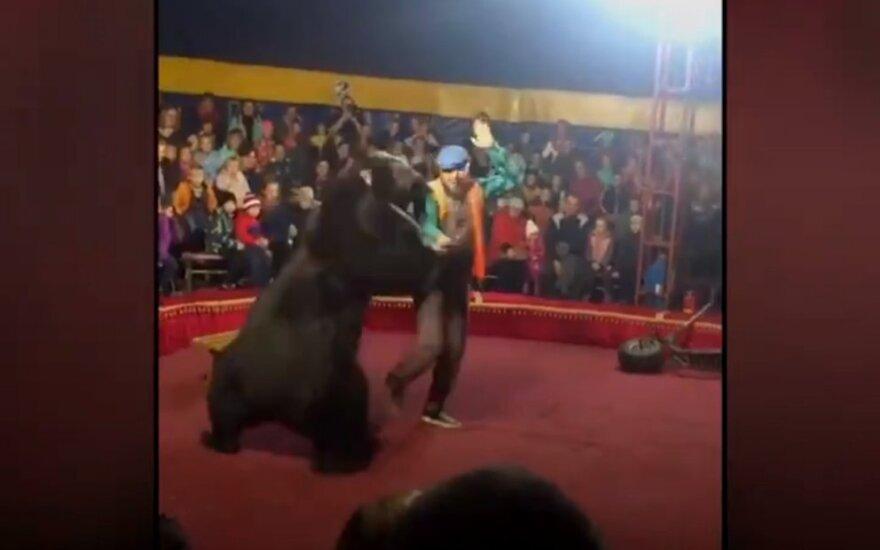Cirko pasirodymo metu Rusijoje meška puolė dresuotoją