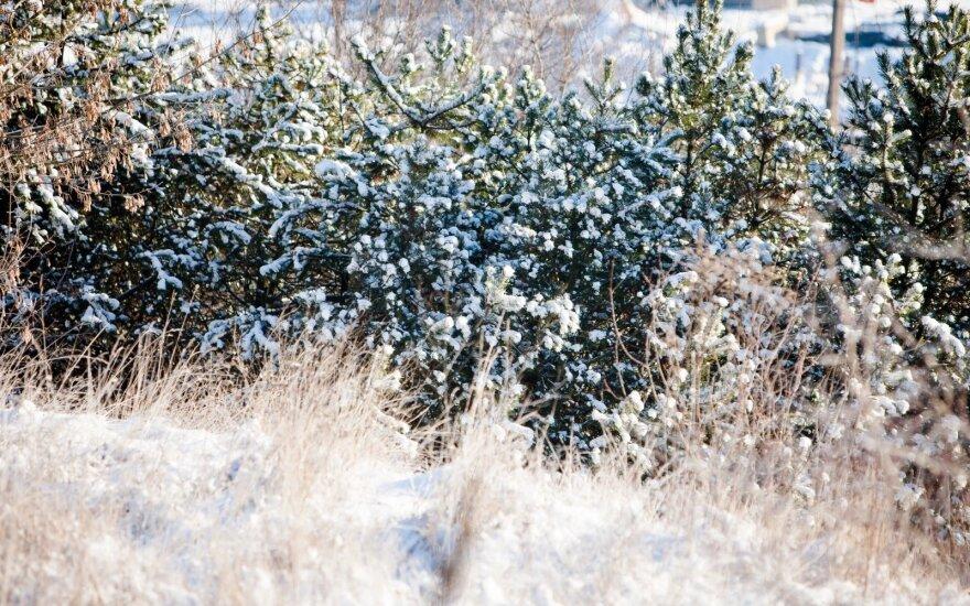 Orai: žiema galanda dantis – laukia -20