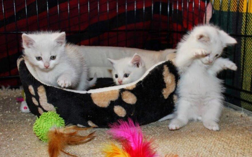 Kačiukai