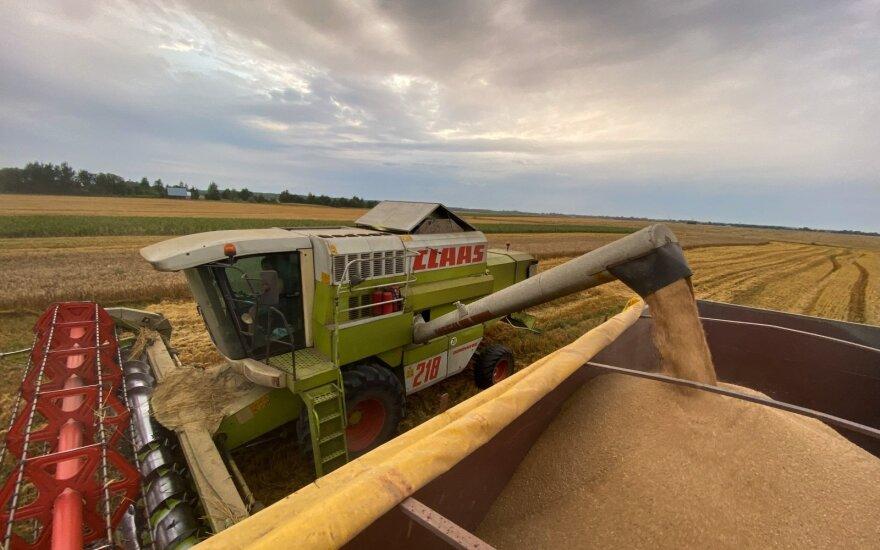 Suskaičiavo, kiek ir kaip šiemet uždirbo vidutinis grūdų ūkis