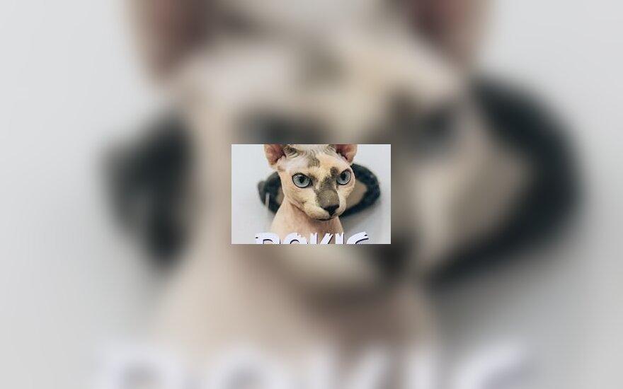 Dingo Perkūnkiemio gyventojas – katinas Rokis