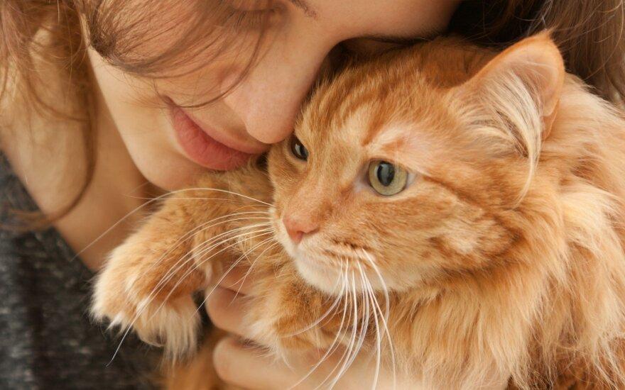 Kodėl katės nuolatos minko letenėlėmis