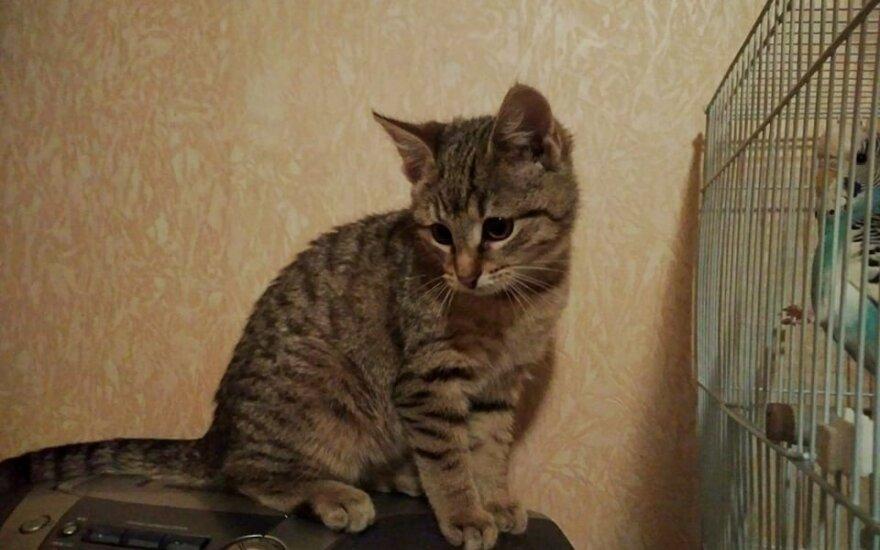 Katinėlio Lūšiuko gyvenimo aprašymas įspūdingas – belieka tik priimti į šeimą
