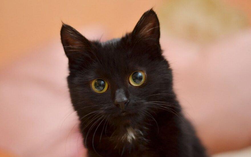Džiaugsmas radus, skausmas vėl praradus: prašo grąžinti katytę