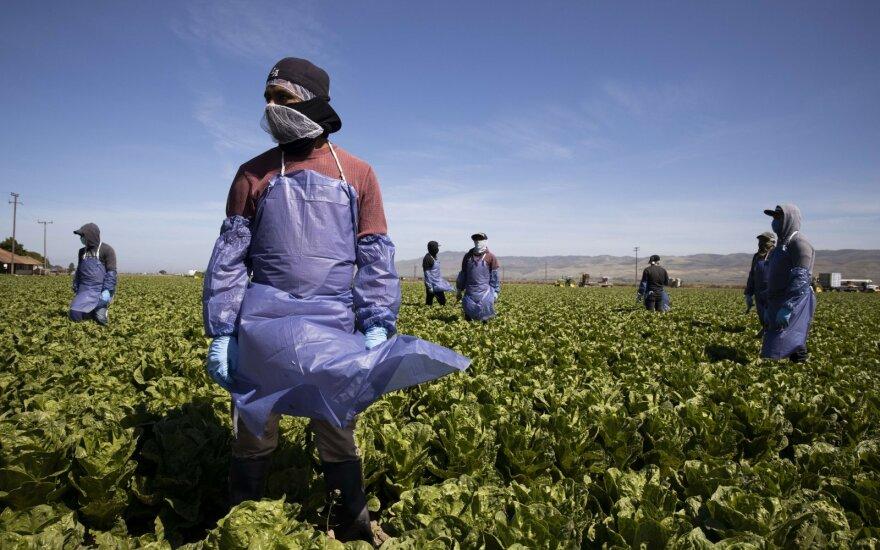 Ūkiai derliaus nuėmimui kviečiasi padavėjus ir kalinius