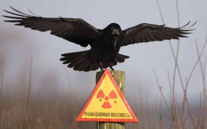 Varnas ant apie radiaciją įspėjančio ženklo