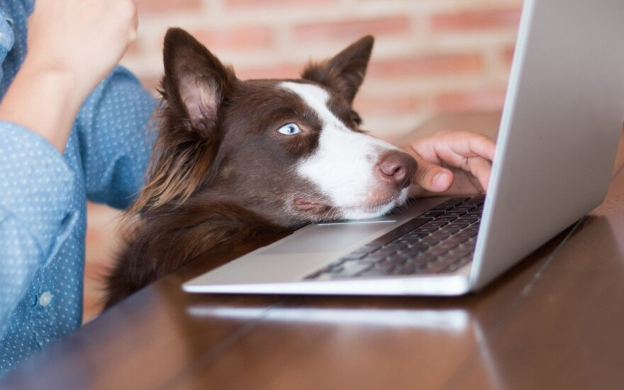 Šuo biure