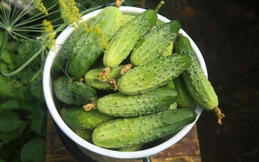 Neįtikėtina agurkų nauda sveikatai