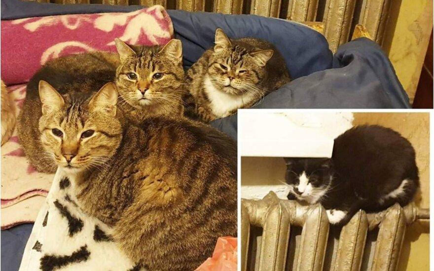 Sunkiai susirgus šeimininkei penki katinėliai gali atsidurti gatvėje: būtina pagalba!