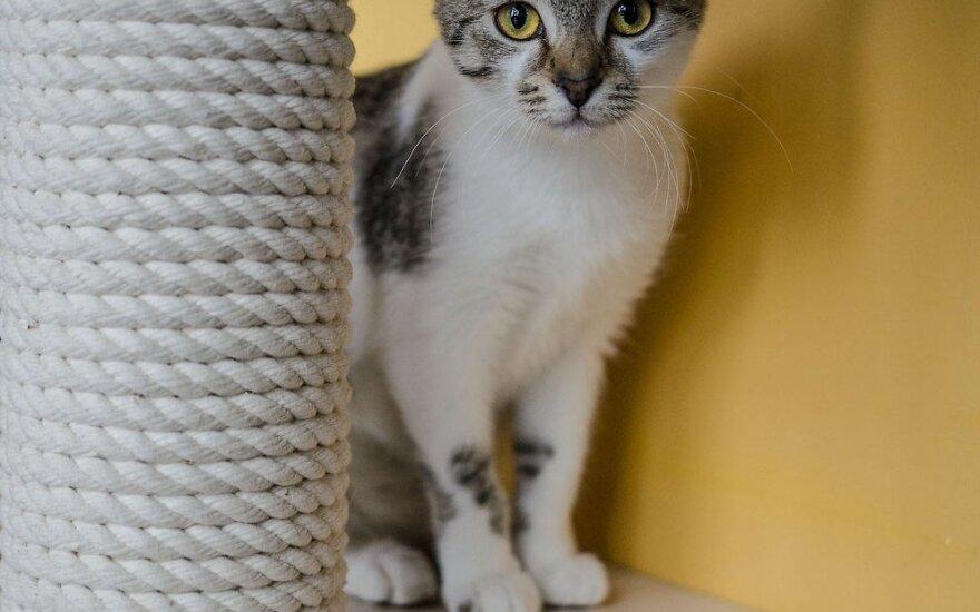 Suteikite katytei Taigai šansą parodyti, kokia ji yra iš tikrųjų!