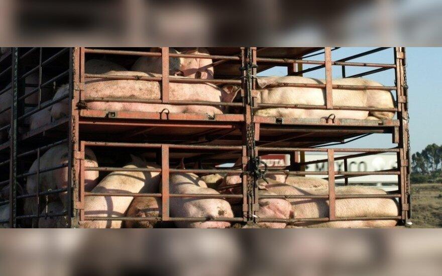 Europos vilkikai su kiauliena atsimuša į Baltarusijos sieną