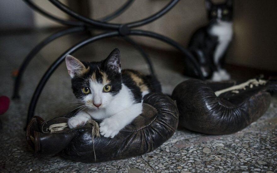 Dvi iš mirties gniaužtų išgelbėtos katytės ieško namų!