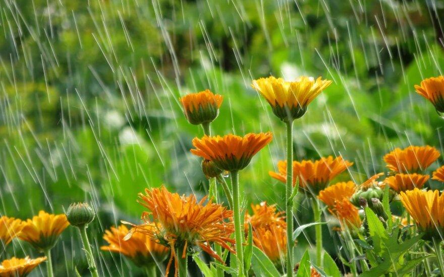 Sekmadienio Evangelija. Saulė ir lietus