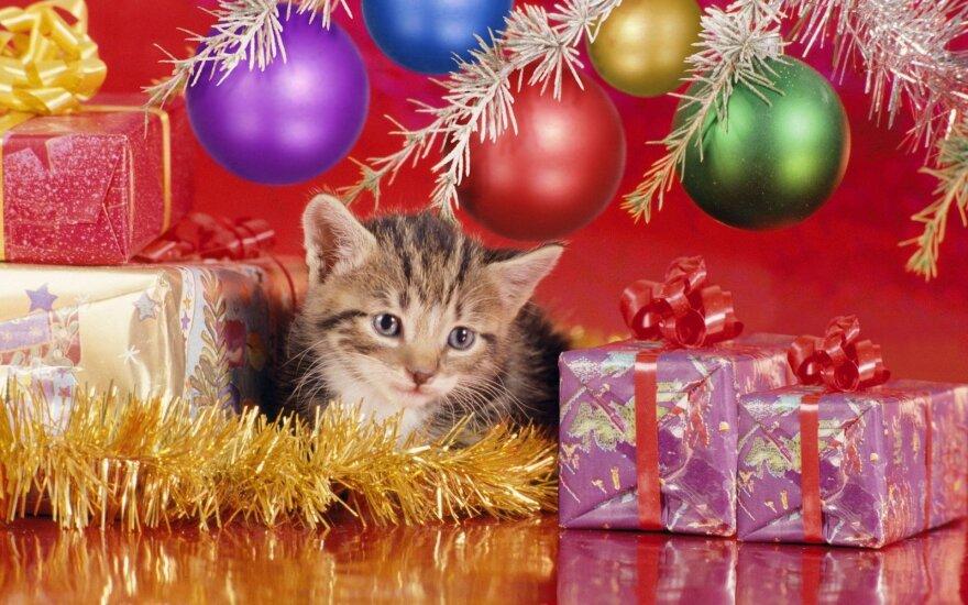 10 populiariausių išmanių kalėdinių dovanų