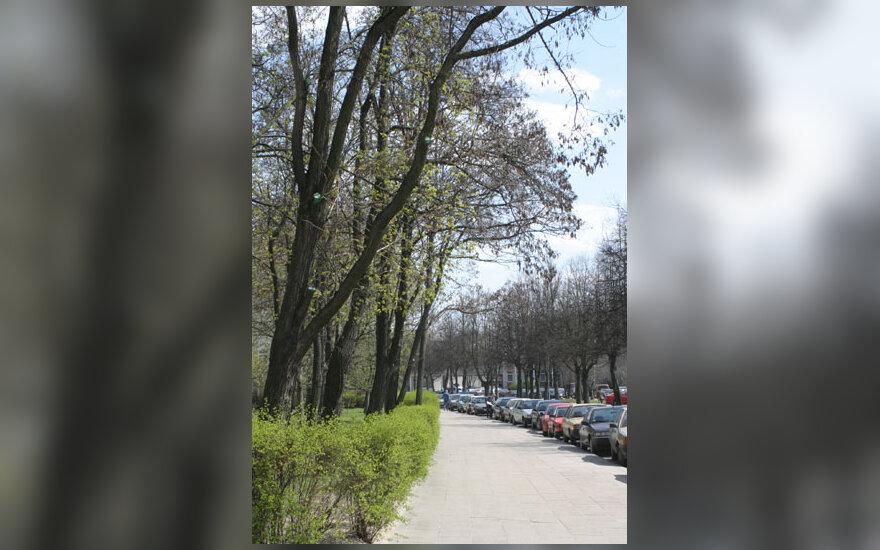 Pavasaris, gatvė, pirma žaluma