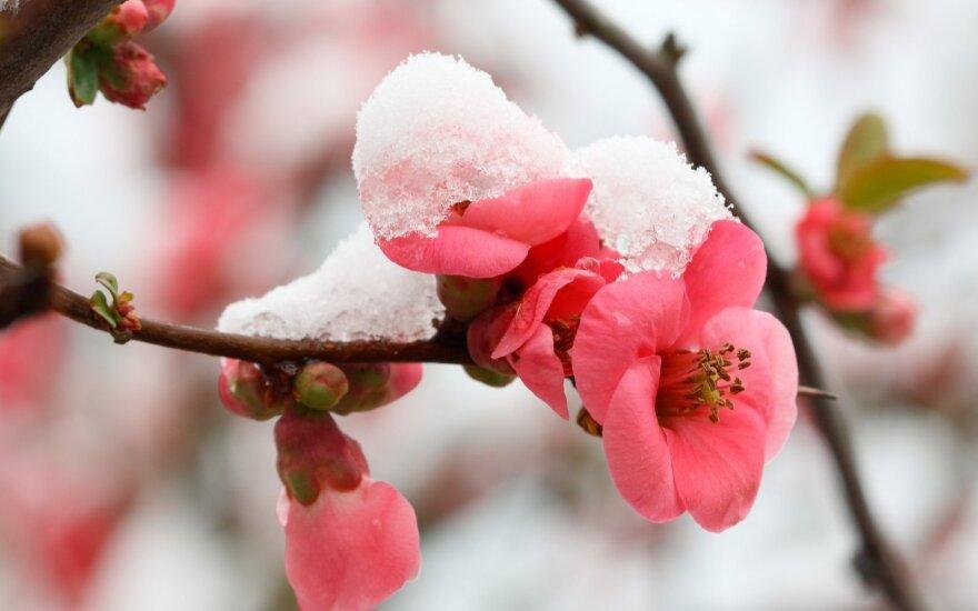 Astrologės Lolitos prognozė balandžio 6 d.: permaininga diena