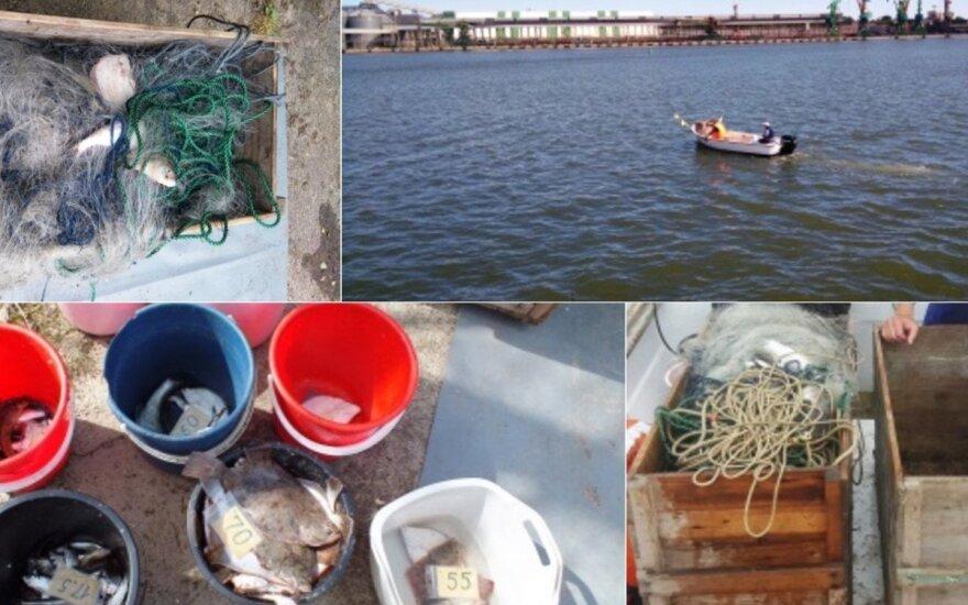 Baltijos jūroje specialistai tyrė žuvis