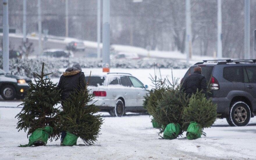 Už Kalėdų eglutės išmetimą – bauda: kaip jos išvengti