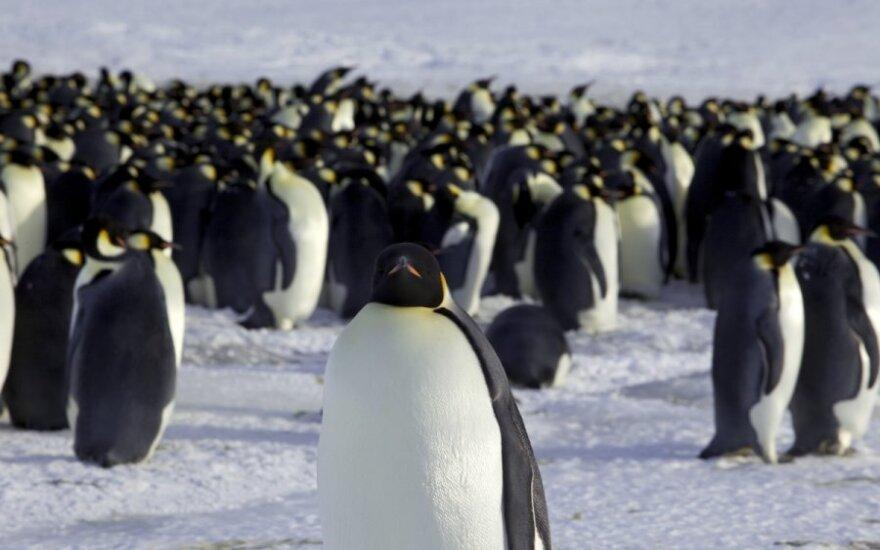 Imperatoriškieji pingvinai